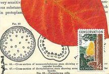 Postal - Mail Art / by Denver Toth