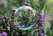 Bubbles / by Bellalagoo .
