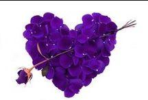 Couleurs,violet,lavande,lilac. / images, objets, tissu,etc..de couleurs violet,lavande,lilac.