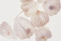 pods / pods, seeds, flowers, propagate, shapes, dried / by Nancy Lennon Hansen