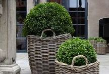 garden: container gardens / potted plants that live happily together in containers - shade, sun, hot, cold