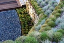 Yard Inspiration / by Felicia Duenas
