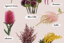 Названия цветов