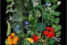 Ботаника / Красивые фото#красивые растения#botanica