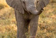 ELEFANTEN - ELEPHANTS / Wundervolle Bilder über diese majestätischen Tiere. Elefanten, Elefanten Babys, Elephants. Wir wollen Spaß an Style und Tierschutz vereinen. Mach mit.