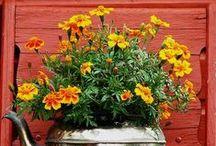 Bloomy Picks / by poetgranny--Judy