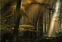 Into the Forest / Born in the wilderness of Alaska, raised deep into the forest of the Northern Cascades. Therefore I seek refuge and solace, retreating back into the cathedral of trees and the serenity of the darkened forest. / by George Harrington