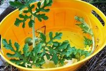 Gardening Ideas / Delightful, practical, creative and innovative ideas to use in your veggie gardens.