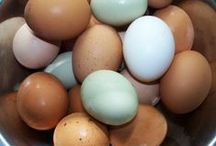 Backyard Ladies - Keeping Chickens / Raising a small backyard flock for the freshest and most nutritious eggs, and the just plain fun of it.