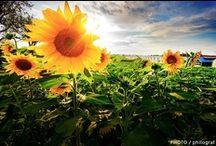 flowers : }