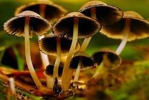 Fungi, Spores & Ferns / by George Harrington