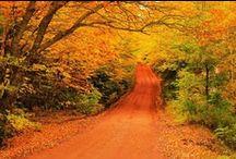 Autumn / by Dirty Sanchioni