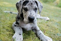 I want a puppy!!!