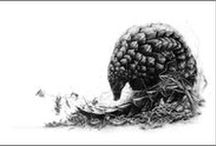 WALKING WITH PANGOLINS