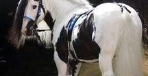 Horses / All things horsey and equestrian. For horse girls!