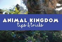 Animal Kingdom / Uncover your wild side at Disney Worlds Animal Kingdom. This theme park is definitely not a zoo! You can venture to the brand new #avatarland and experience the plant of #pandora. If not adventure on a African safari or even travel back in time to come face to face with the dinosaurs. If you are feeling really brace head to #expeditioneverest you may just face a #yeti