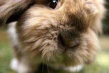 For the *Love* O Bunnies-Hutch#1 / by Kimberly Gloe