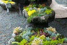 Nature, Landscaping, Garden