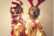 A Christmas Carol  / by Nicole Benfante