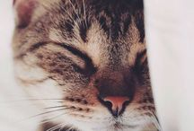 Cats / Gorgeous artwork, photos, facts and adorable memes about felines.