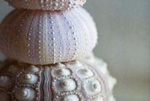 Shells / Beautiful shells for art studies.