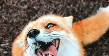 Foxes / Stunning photos and art.