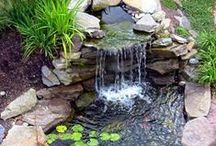 Garden / Beautiful garden inspiration and plants I would like to grow.  / by Kelli Boggs