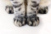 Fur Babies / by Ashley Donathan