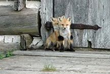 MUST ♥ FOX