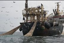 No Super Trawlers / Super trawlers are like giant vacuum cleaners of the sea, hoovering up entire schools of fish and wiping out marine life like dolphins and seals. This type of overfishing is wasteful, indiscriminate and unsustainable. Take action: No Super Trawlers. Not here, not anywhere.  / by Greenpeace Australia Pacific