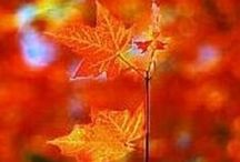 fall / by Lee Ann Gunnells