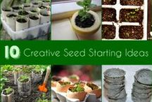Seeds / When to sow, what to use, how to sow, transplanting and seed saving.