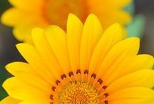 yellow / by Ramblings of a Jesus Lover