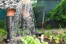 Moestuin juni / Juni, een maand met veel zon! Geef je moestuin dus genoeg water. Alles groeit deze maand snel en we kunnen veel gaan oogsten. Denk deze maand aan het zaaien van Chinese kool, basilicum, dille, witlof en andijvie.