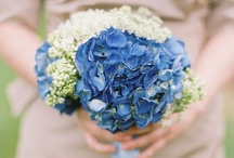 Nantucket Wedding / by ASHA By ADM