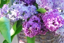 Lilacs  / by Cindy Martin