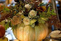 Fall / by Susan Jackson