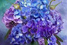 Flowers / by Susie Dempze