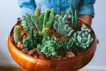 Inspirações: Jardinagem/Hortas