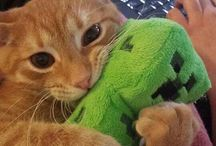 Cuki cicák