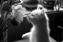 Animals / by Lainie