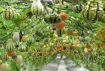 The Well-Tamed Garden