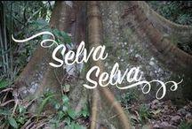 Peru Rainforest / Reise in den Regenwald von Peru und erlebe seine magische Tier- und Pflanzenwelt!