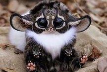 Animales bonitos / Animales muy bonitos y raros