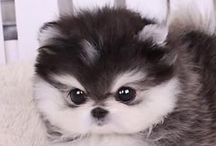 Cute puppies / Adorable  Puppies and dogs
