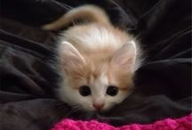 Kitty cats / Cute, adorable and funny cats