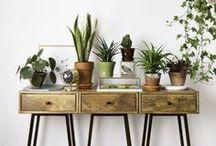 植物のある生活 / お部屋を水々しく彩ってくれる植物をメインにしたインテリア画像をピンしています。