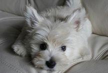 Puppy Love / by Danielle Cornett