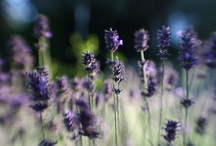 Photography-Lensbaby ♥