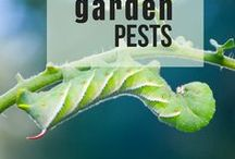 Garden Pests / Hornworms? Aphids? Squash bugs? Get rid of those garden pests once and for all
